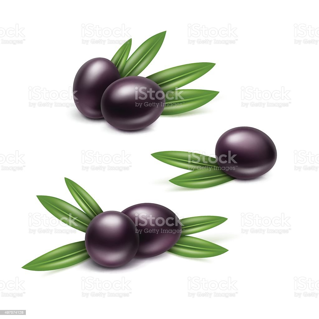 Vector Set of Black Olives Branches with Leaves Isolated vector art illustration