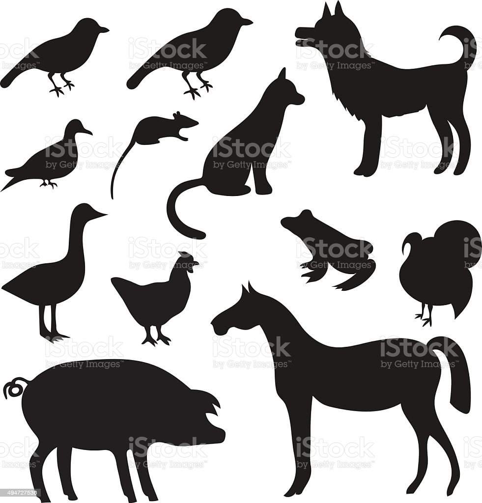 Vector Set of Black Tropical Animals and Birds Silhouettes. vector art illustration