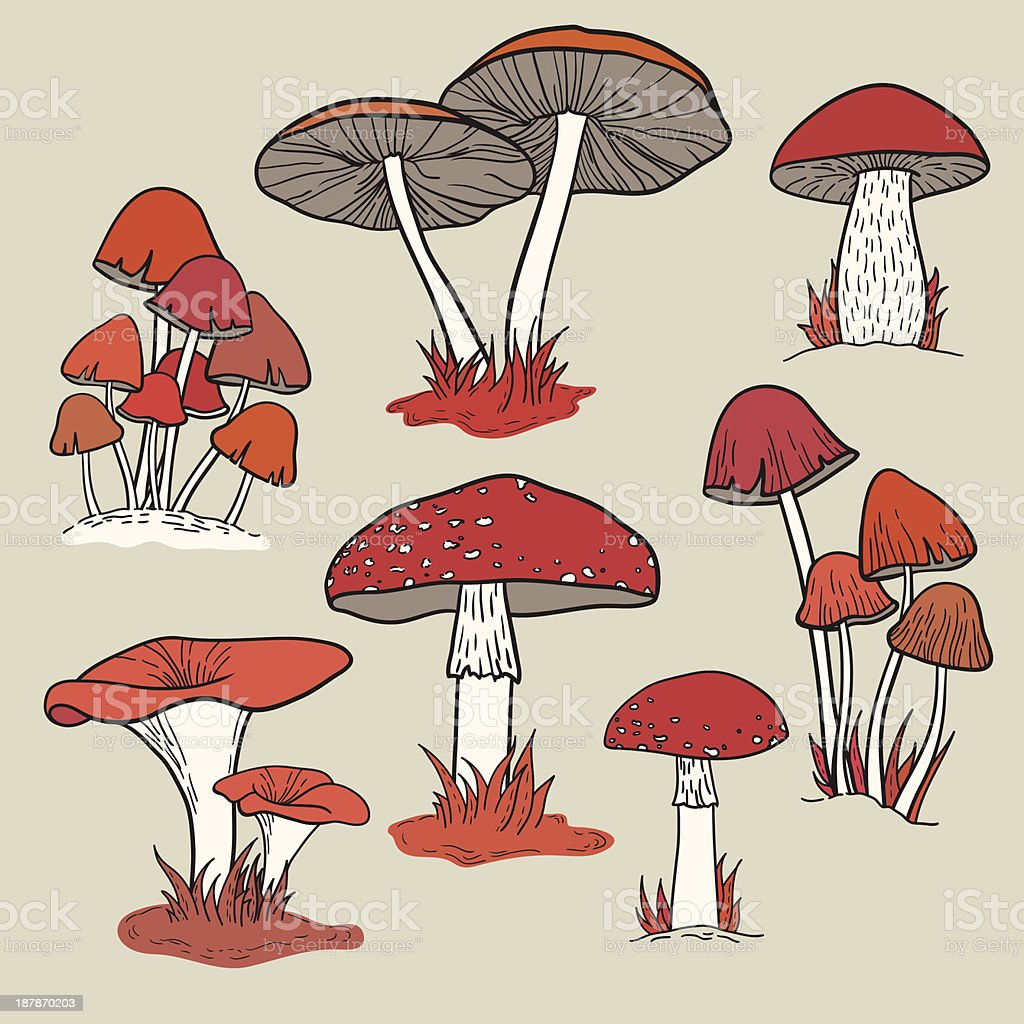 Vector set with mushrooms royalty-free stock vector art