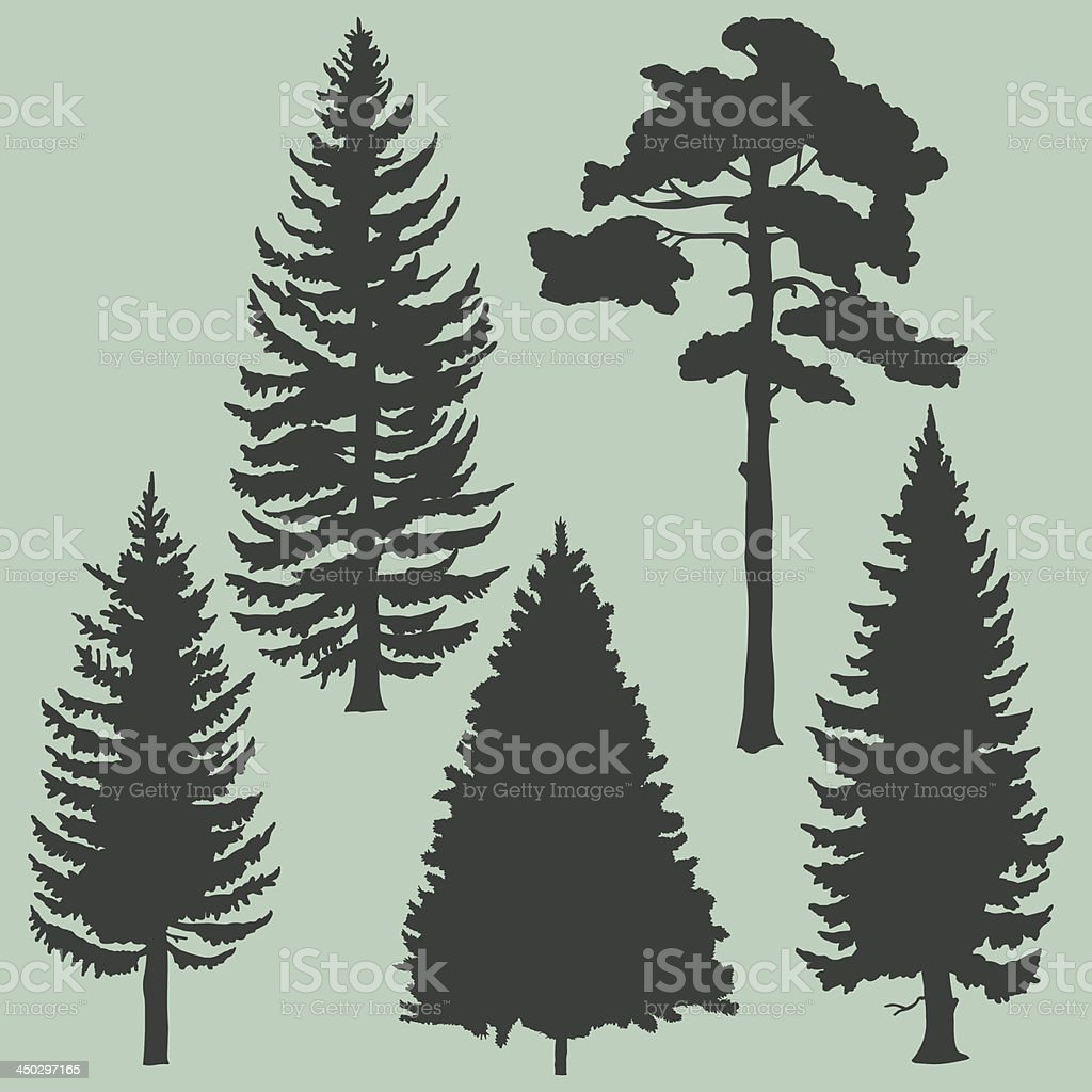 vector set of coniferous trees silhouettes vector art illustration