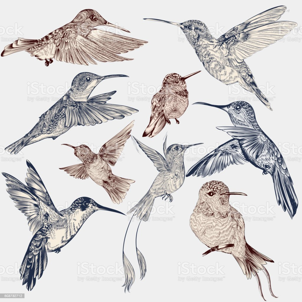 Vector set of detailed hand drawn birds for design vector art illustration