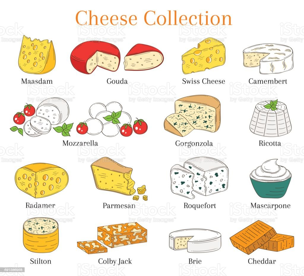 Vector set of different types of cheese, hand drawn illustration isolated on white background vector art illustration