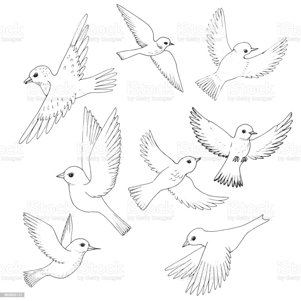 Set of sketches of flying swallows stock vector illustration - Vector Set Of Flying Birds Royalty Free Stock Vector Art