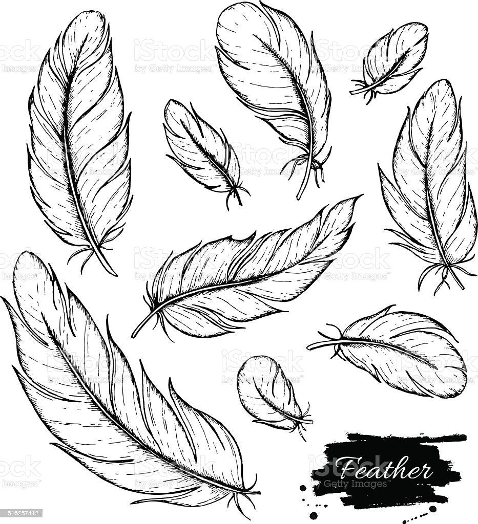Vector set of hand drawn feather. Ink vintage illustration vector art illustration