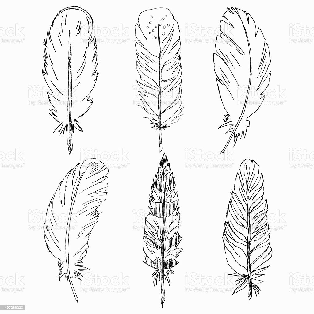 Vector Set of Hand drawn feathers isolated. Tribal design, Tatto vector art illustration
