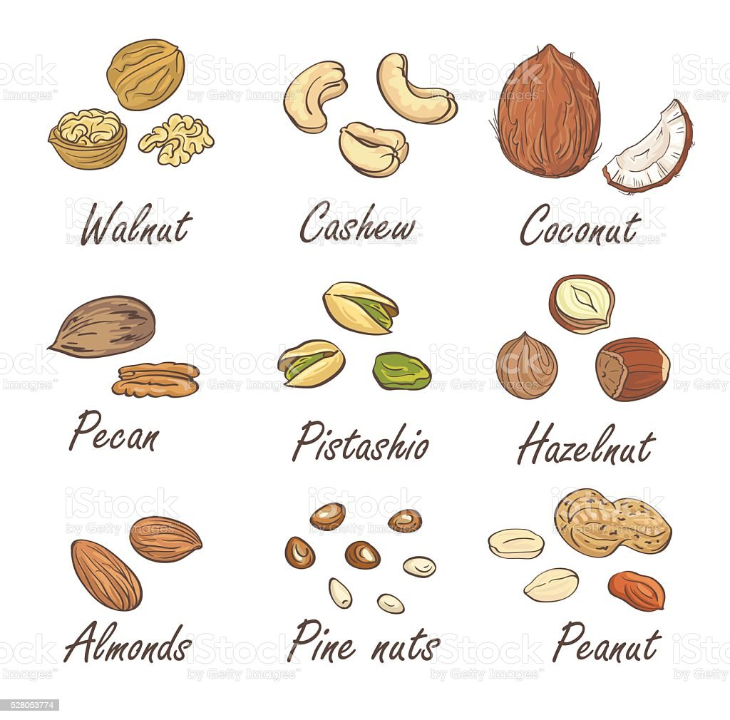 Vector set of hand sketched nuts on white background. vector art illustration