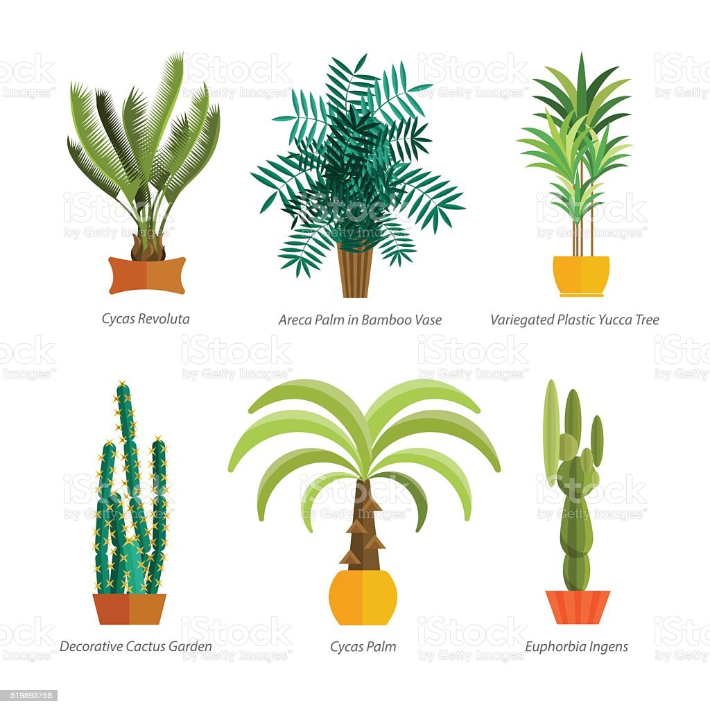 Decorative Indoor Trees Vector Set Of Indoor Tree Home Plants In Pots Illustration Stock