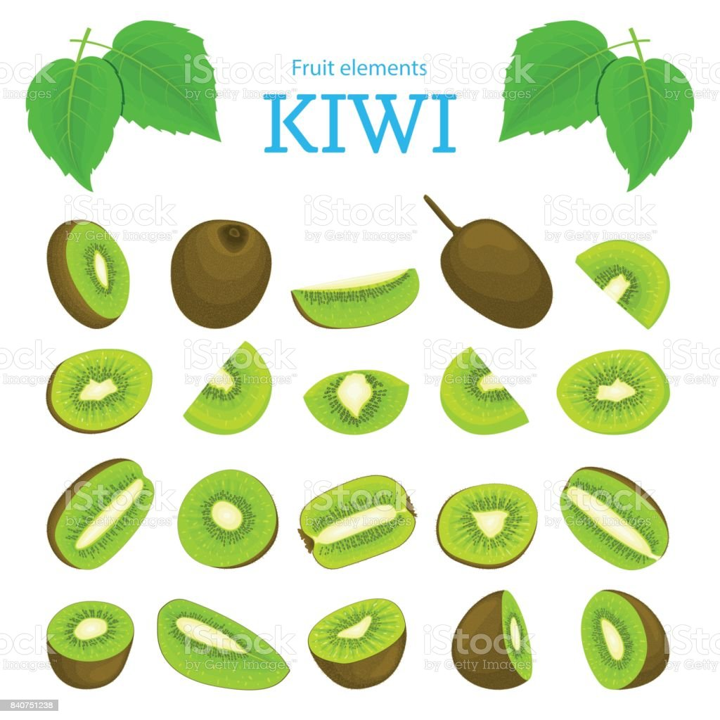 Vector set of ripe tropical kiwi fruits. Kiwifruit peeled, piece  half slice seed. Collection  delicious green  designer elements appetizing looking for packaging  juice breakfast halth food vector art illustration