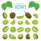 Vector set of ripe tropical kiwi fruits. Kiwifruit peeled, piece