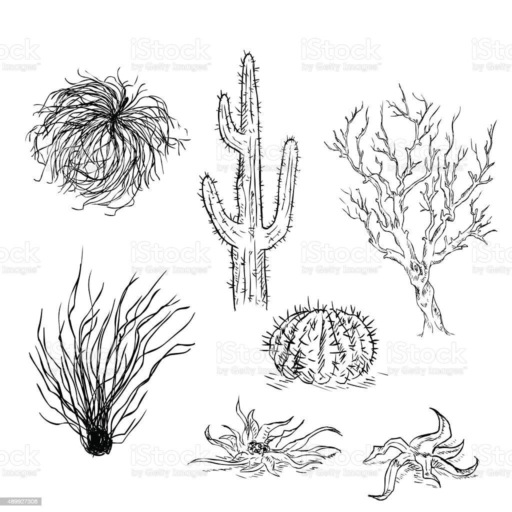 Vector Set of Sketch Cactuses and Desert Plants vector art illustration