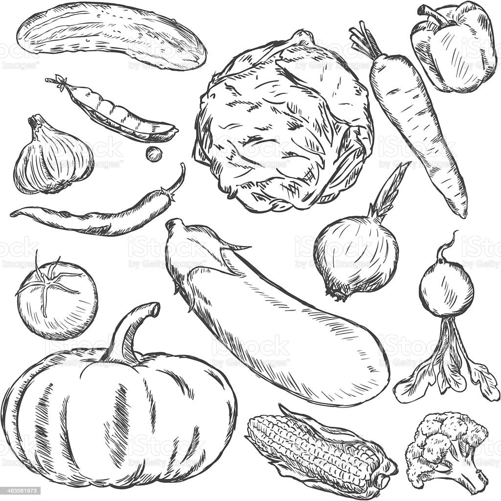vector set of sketch vegetables royalty-free stock vector art