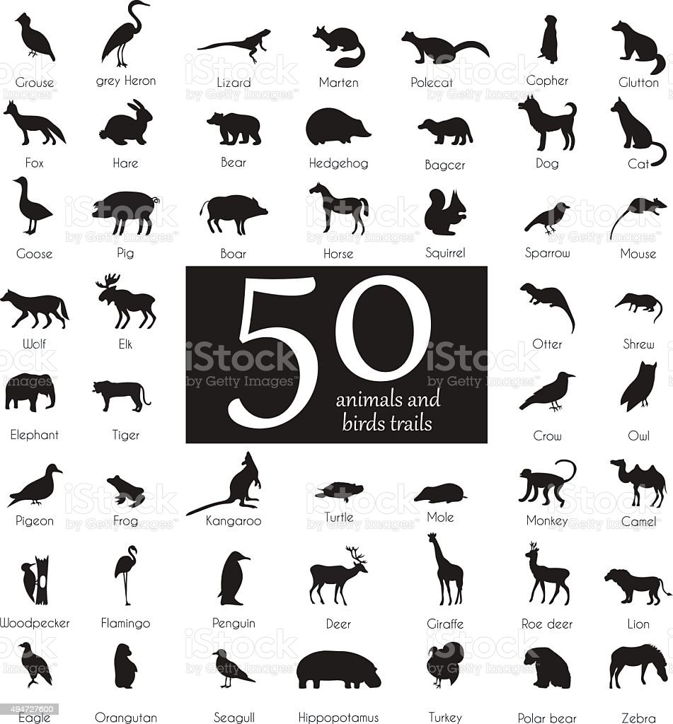 Vector set of very detailed animal silhouettes with name vector art illustration