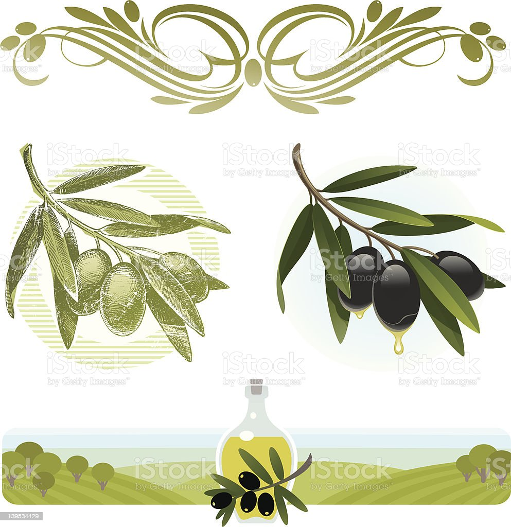 Vector set - olive branches and oil royalty-free stock vector art