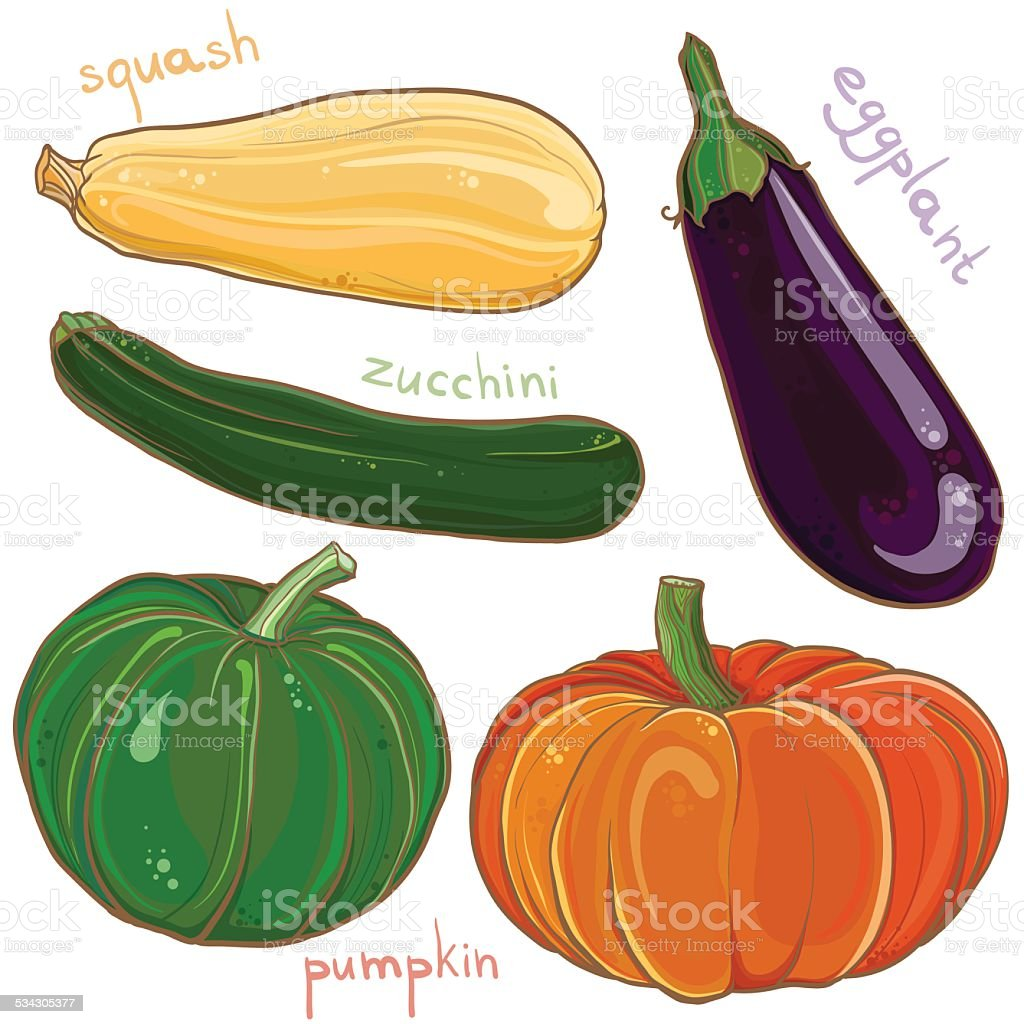 Vector set with illustration of eggplant, pumpkin, squash and zucchini vector art illustration