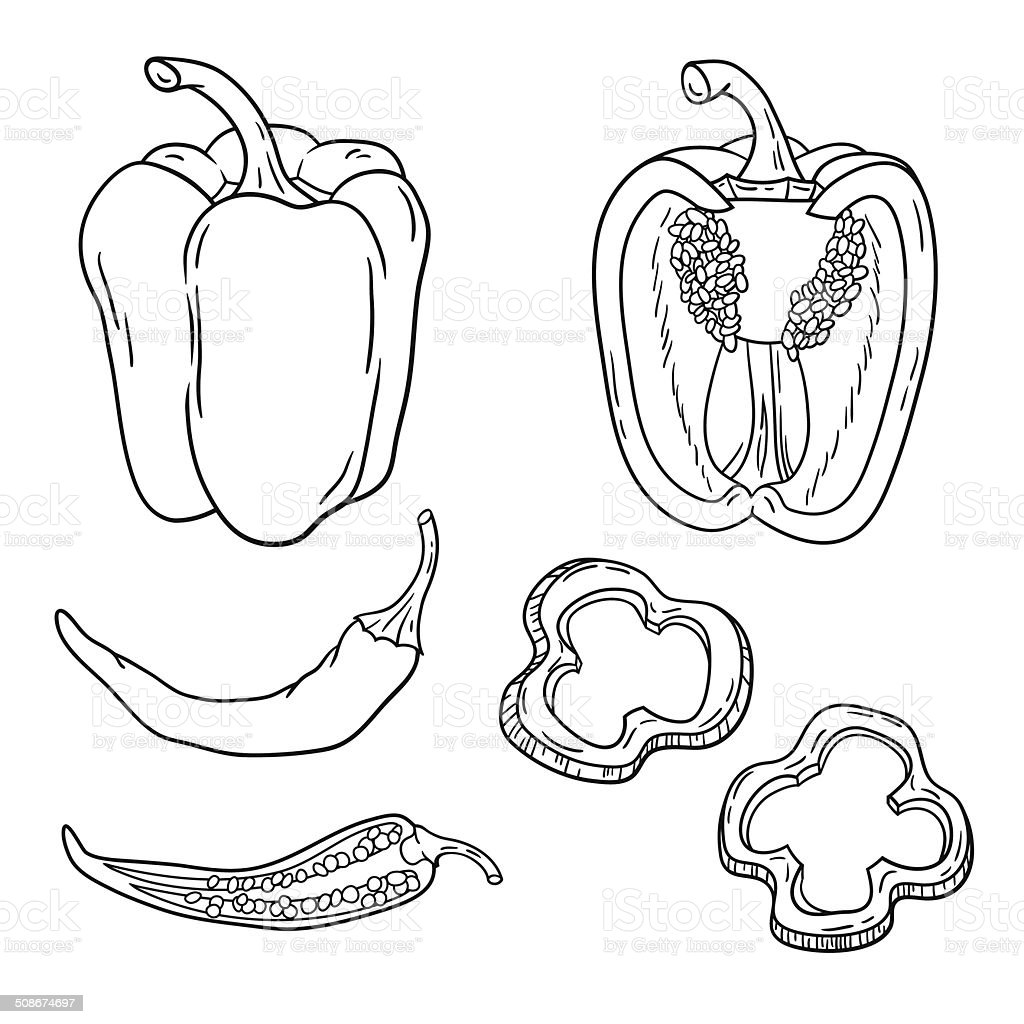 Vector set with vegetables: peppers isolated on white vector art illustration