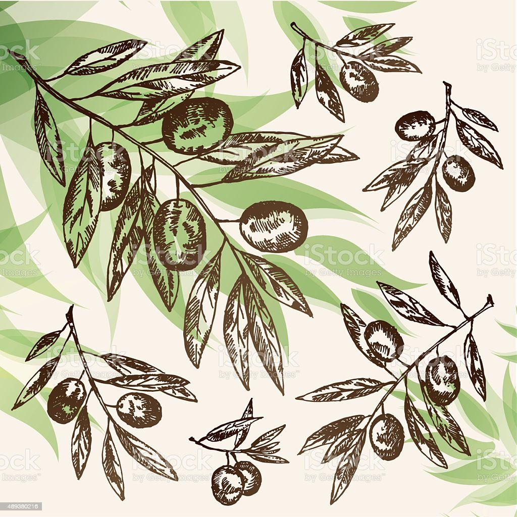 Vector set:olive branch. hand drawn vector art illustration