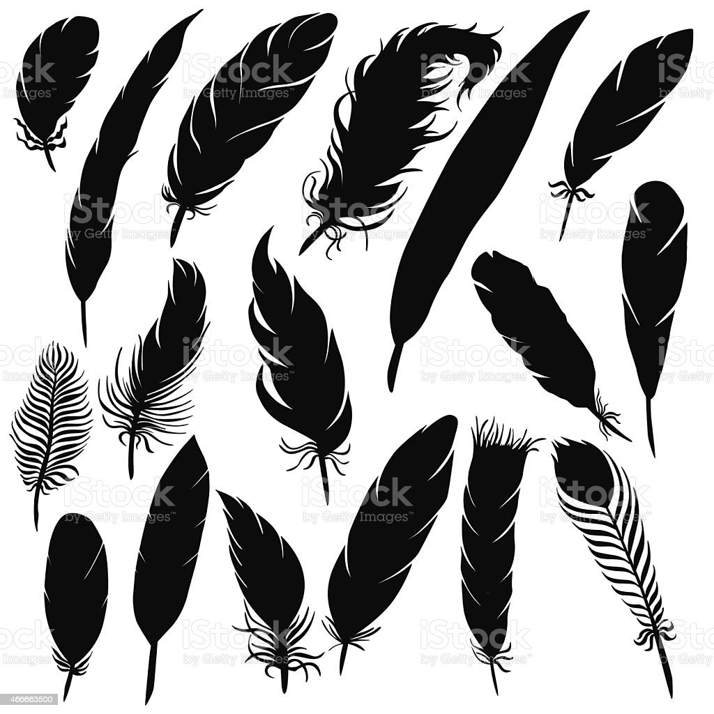 Vector silhouette of different feathers vector art illustration
