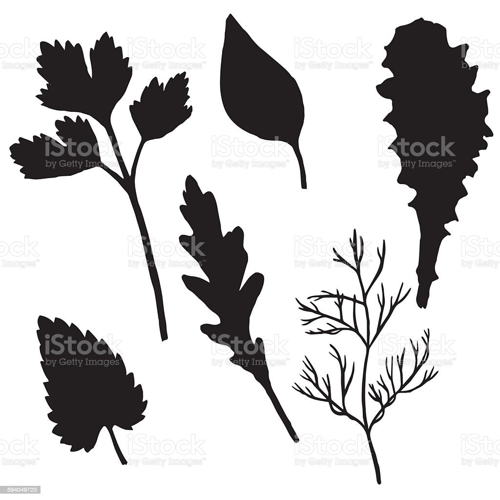vector silhouettes of potherb vector art illustration