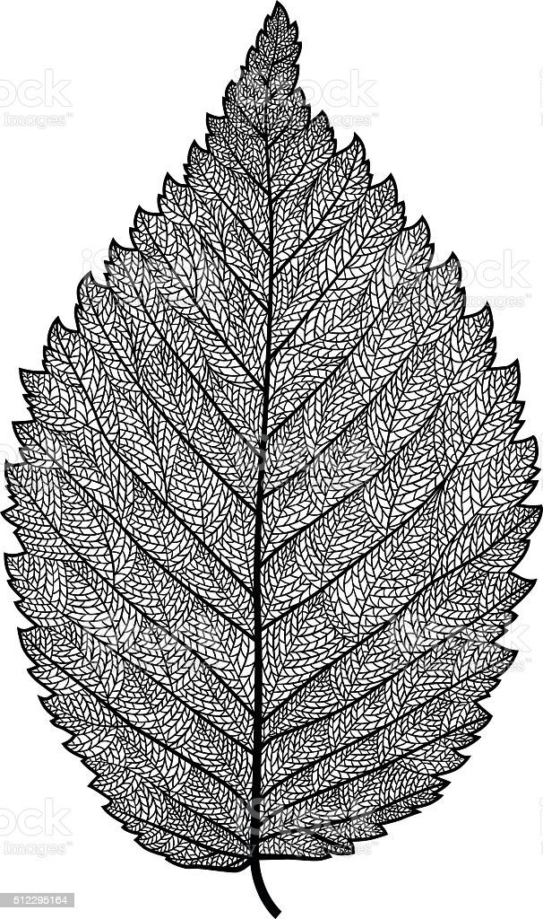 vector skeletonized leaf vector art illustration