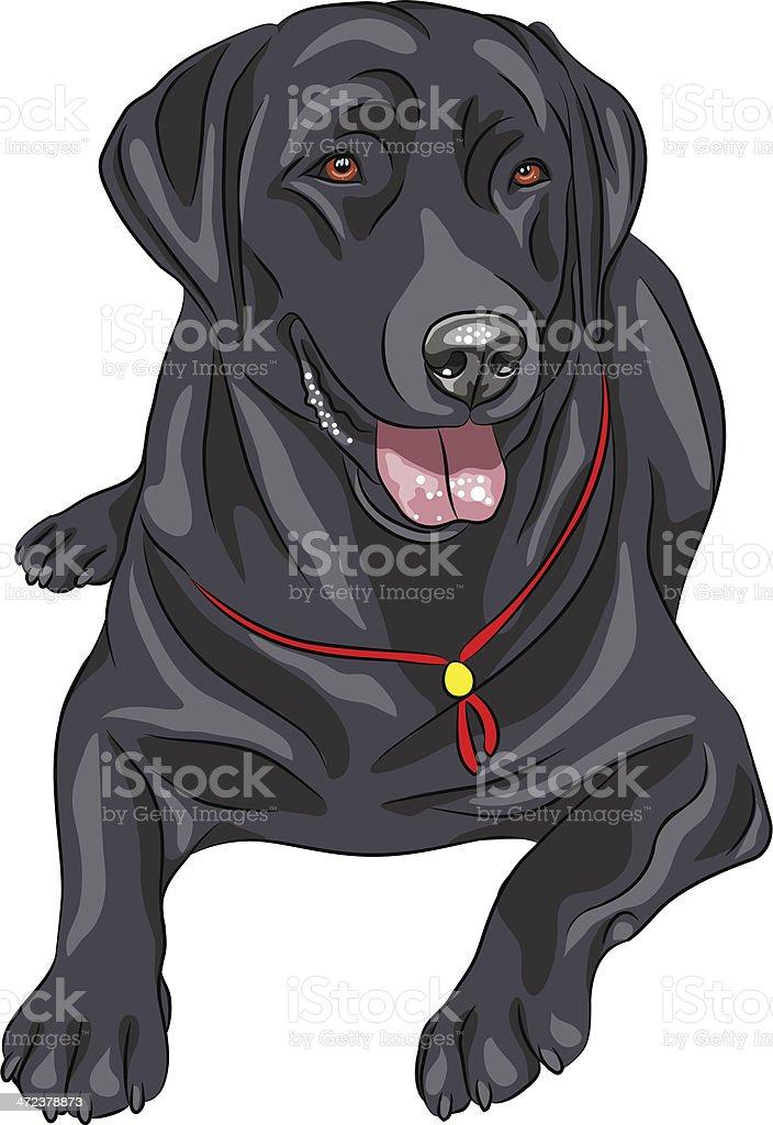 vector sketch dog breed Labrador Retriever vector art illustration