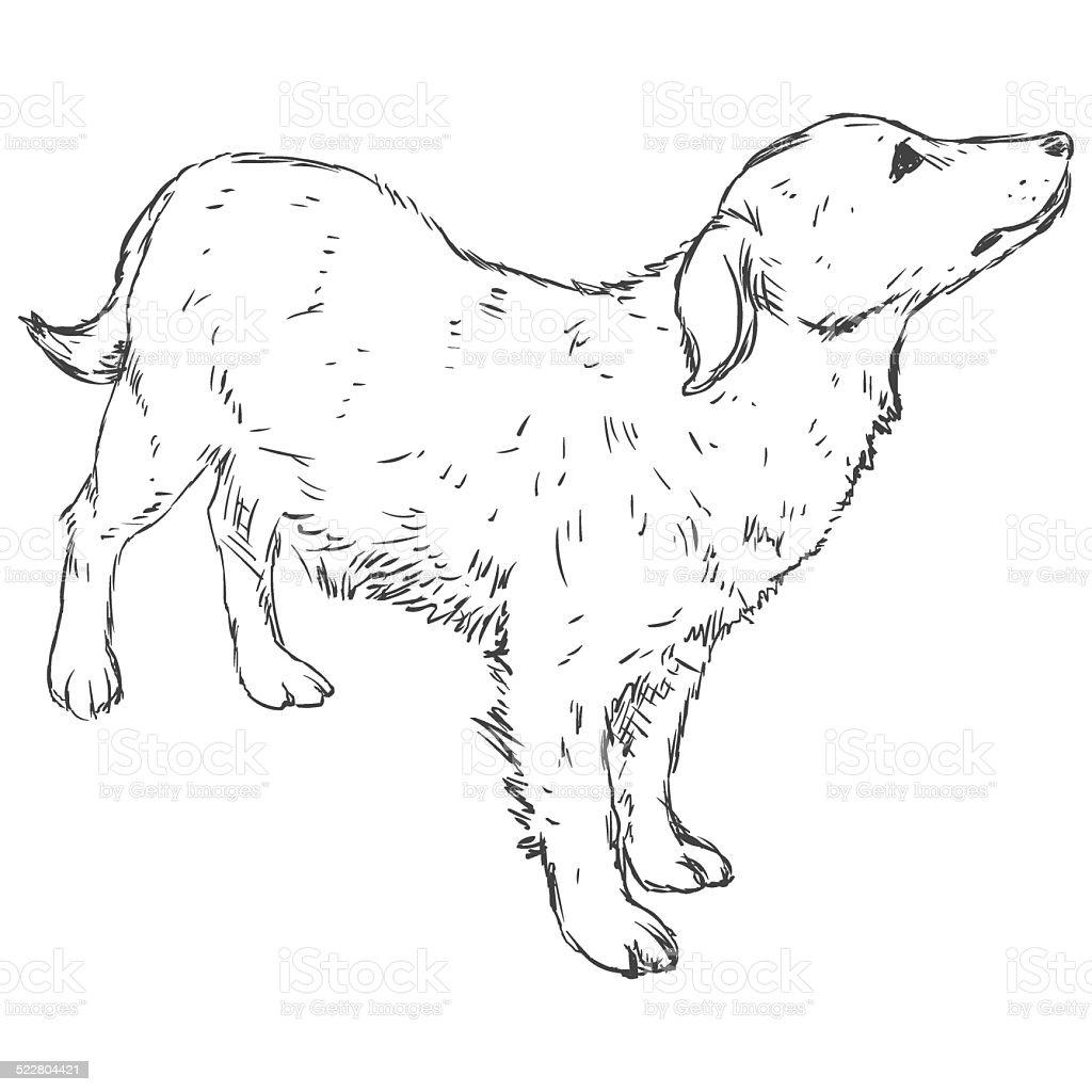 Vector Sketch Dog vector art illustration