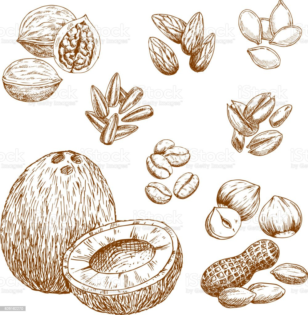 Vector sketch icons of nuts, grain and seeds vector art illustration