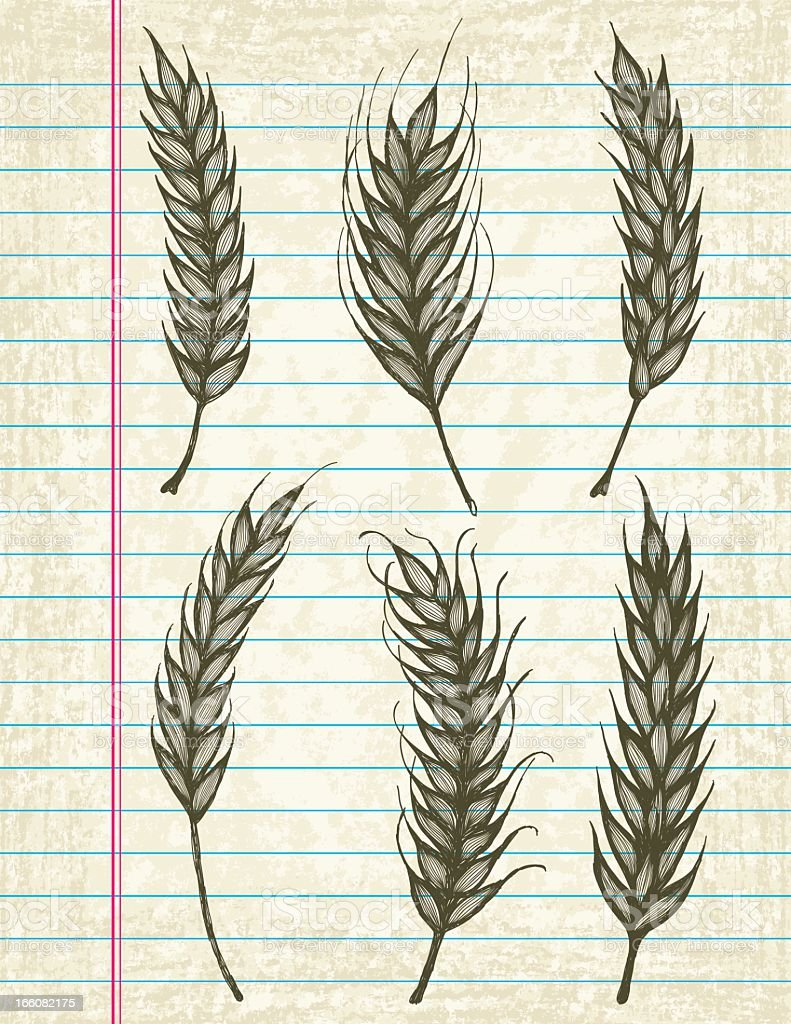 Vector Sketchy Wheat Icons on Old Lined Paper Background. vector art illustration