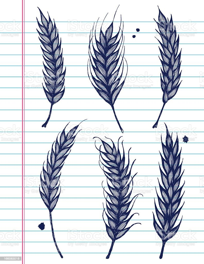 Vector Sketchy Wheat Icons on White Lined Paper Background. royalty-free stock vector art