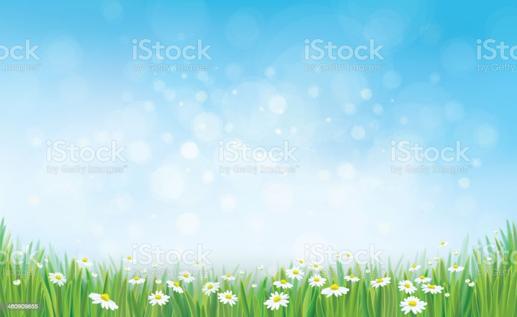 Vector sky background with grass and chamomiles. vector art illustration