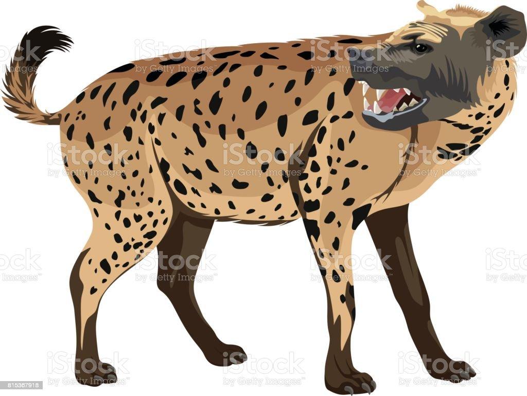 vector spotted hyena illustration vector art illustration