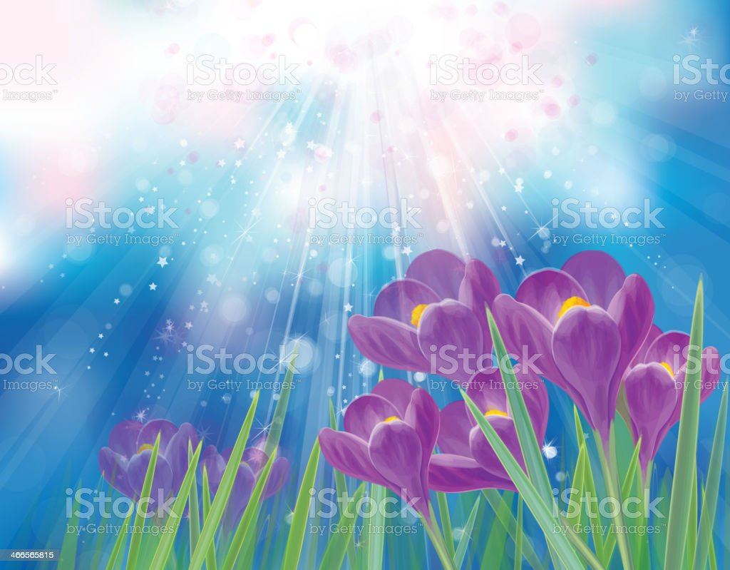Vector spring crocuses flowers on sky background. vector art illustration