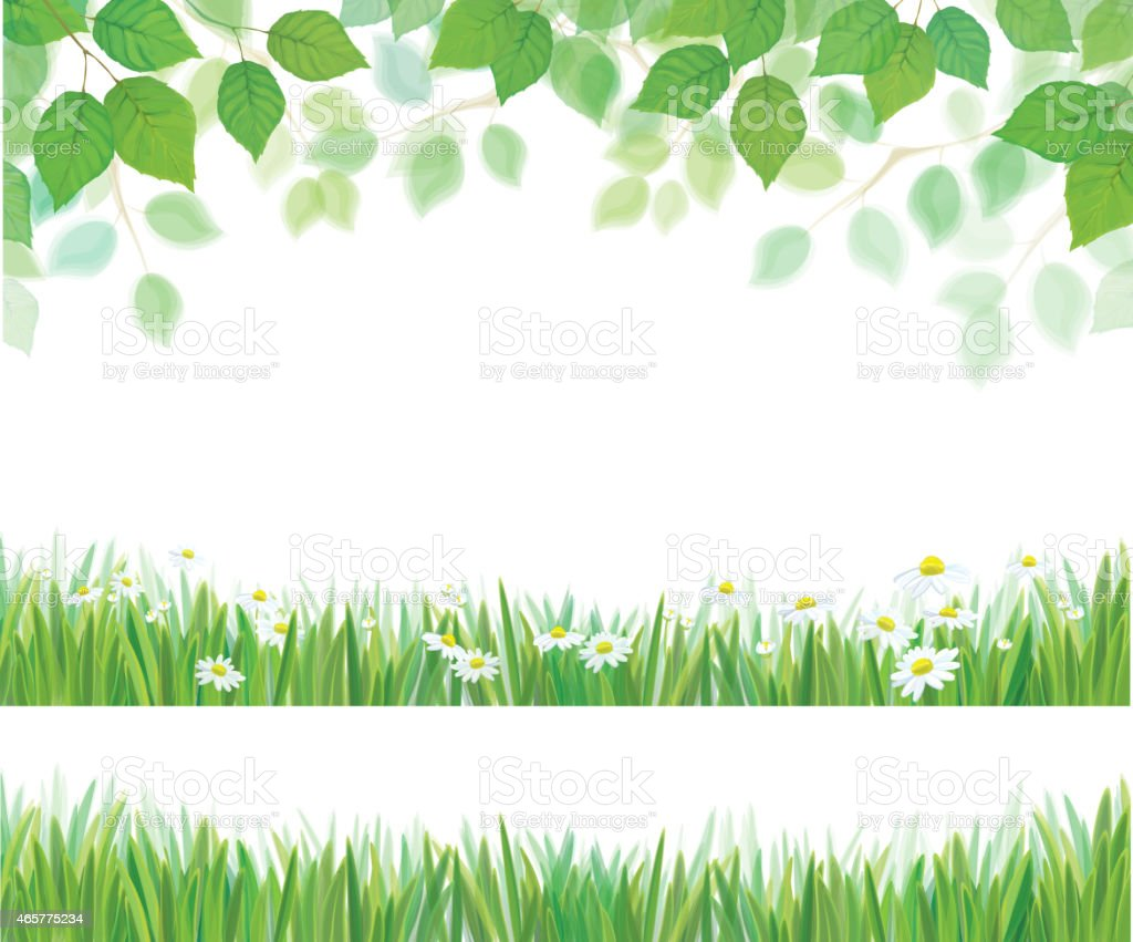 Vector spring leaves, grass and daisy flowers  borders isolated. vector art illustration