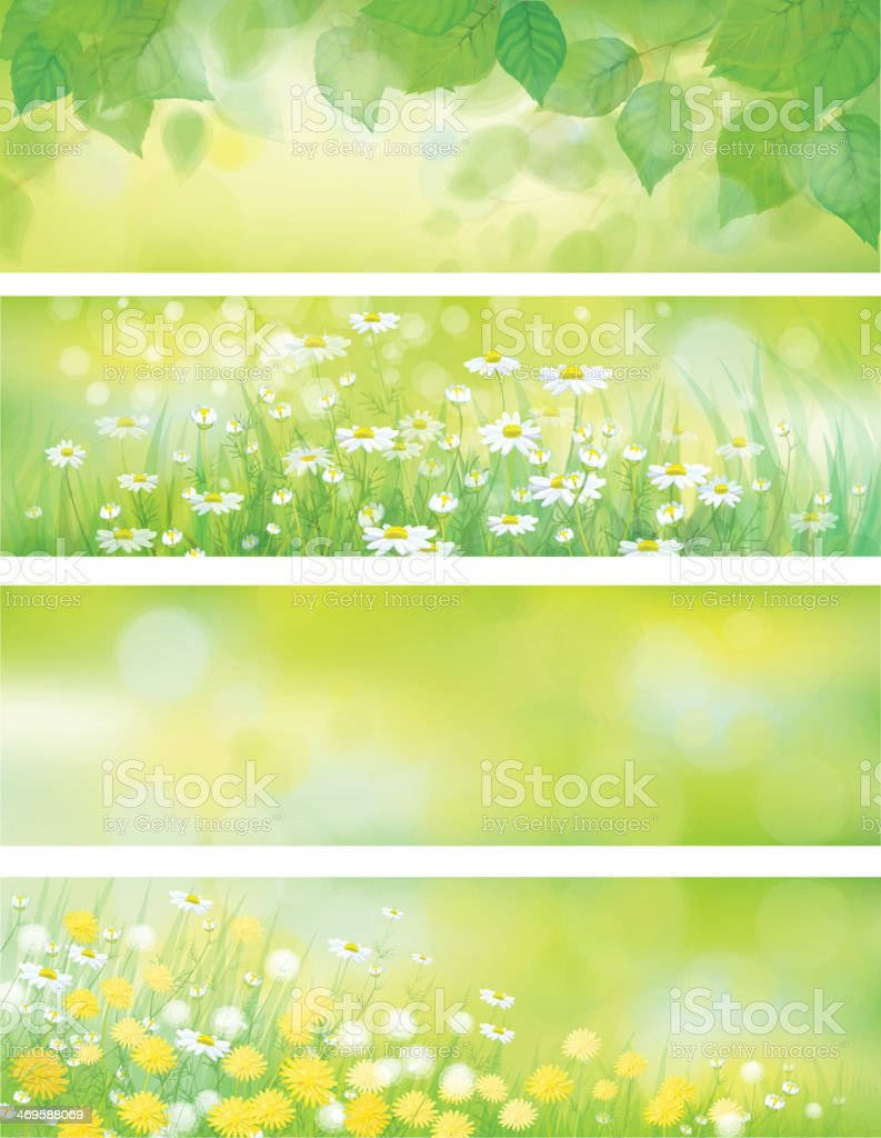 Vector  spring nature banners, birch  tree leaves,  dandelion and chamomile. vector art illustration