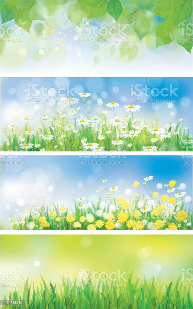 Vector spring nature banners, birch tree leaves, dandelion and chamomiles. royalty-free stock vector art
