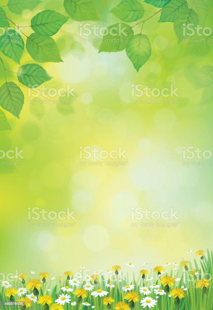 Vector sunshine background with chamomile and dandelion. vector art illustration