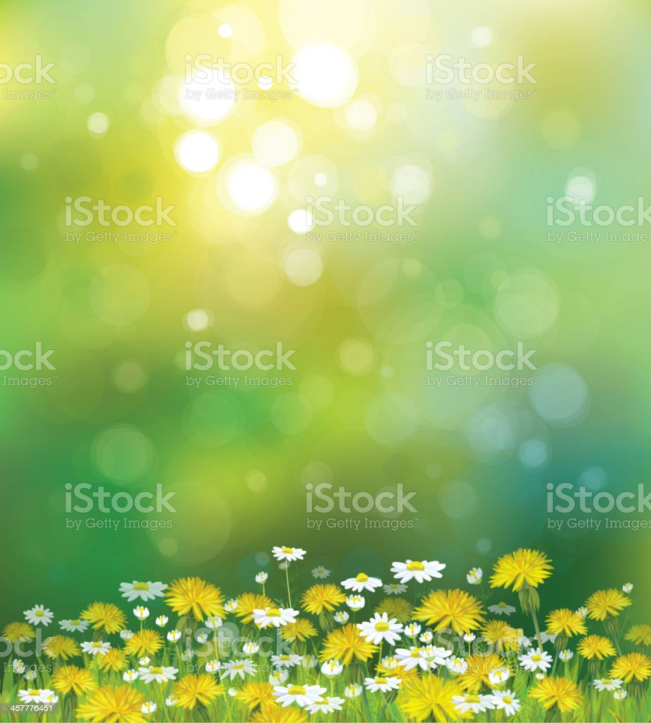 Vector sunshine background with chamomiles and dandelions. vector art illustration