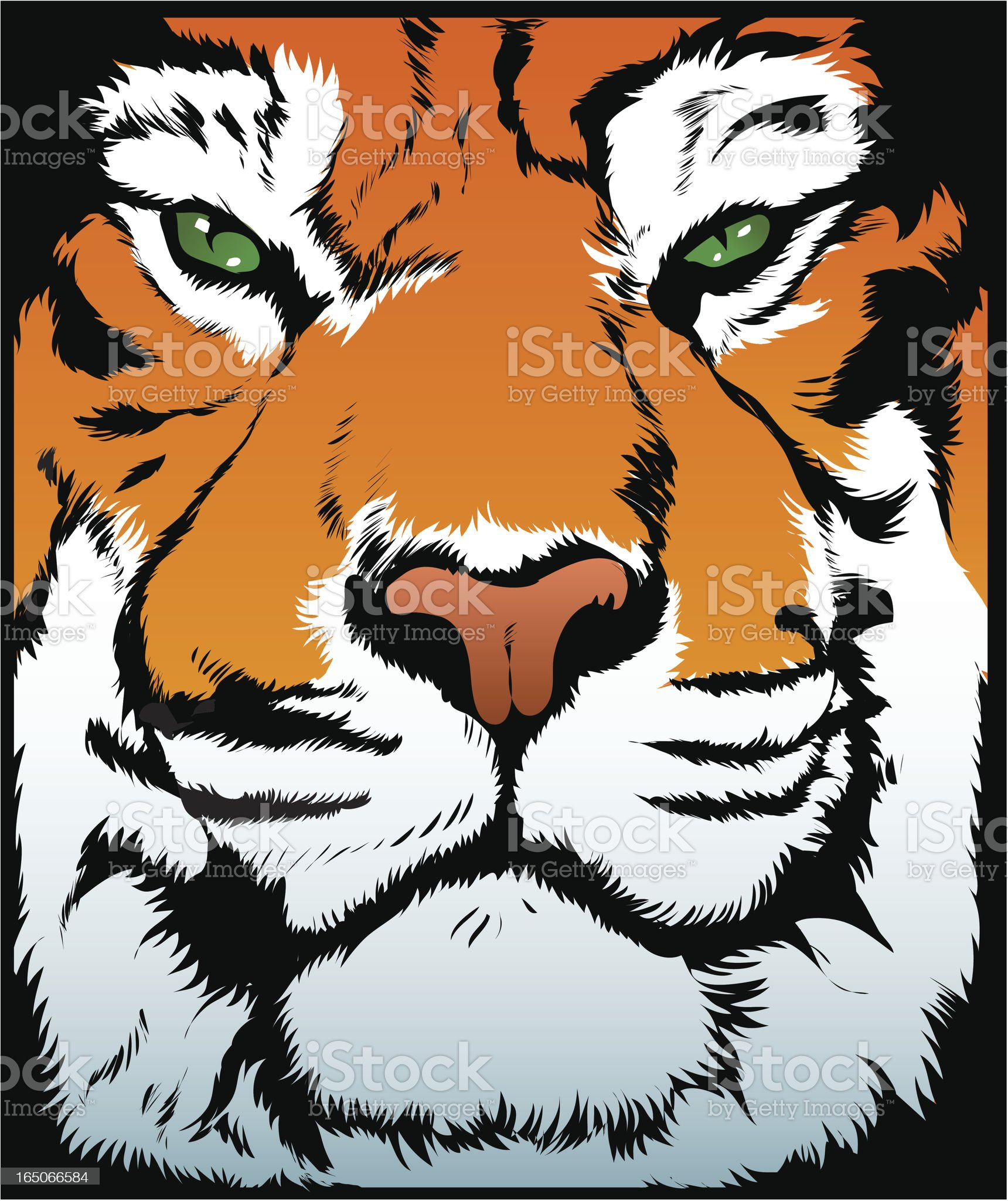 Vector tiger royalty-free stock vector art