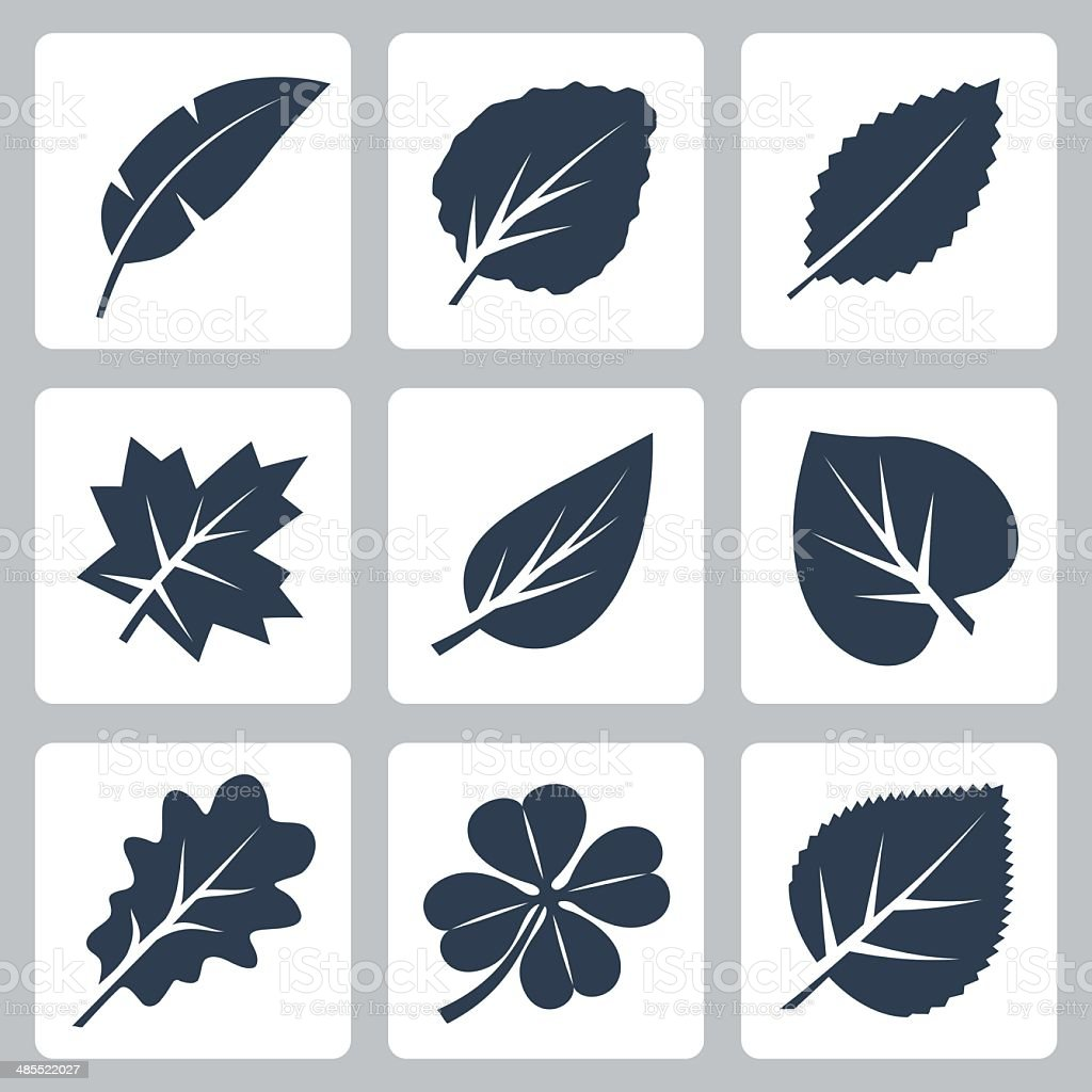 Vector tree leaves icons set vector art illustration