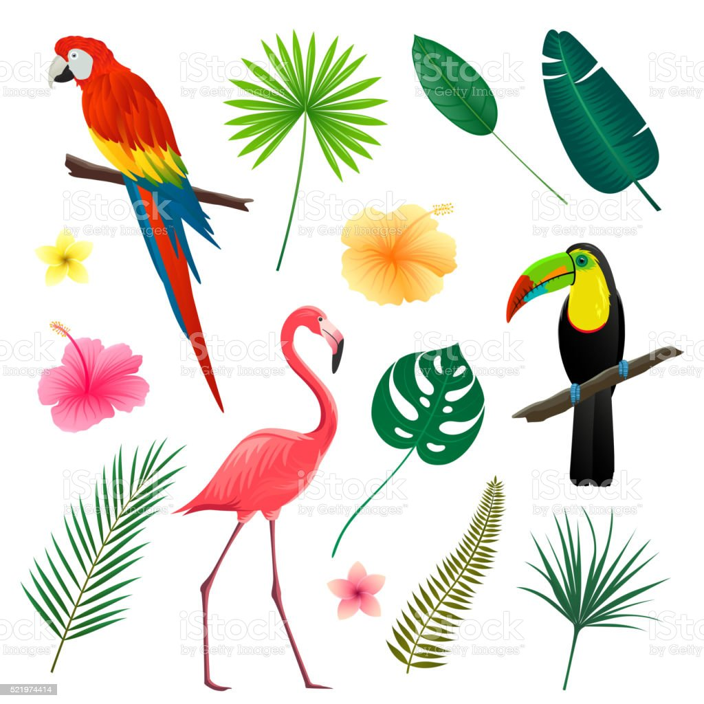 Vector Tropical Leaves, Flowers and Birds vector art illustration