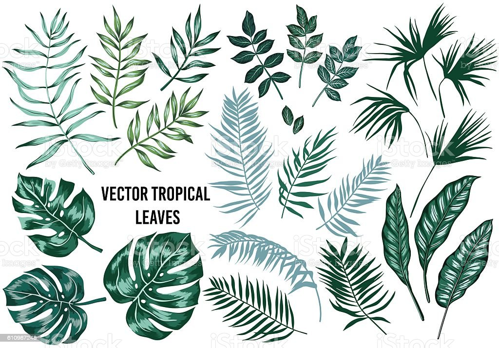 Vector tropical palm leaves set isolated vector art illustration