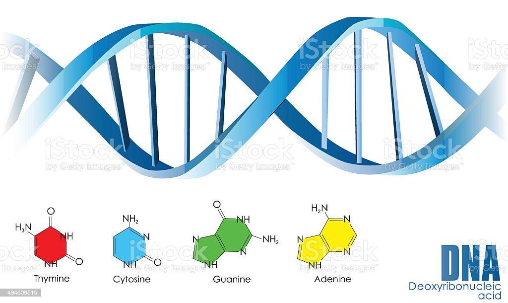 ADN illustration stock vecteur libres de droits libre de droits