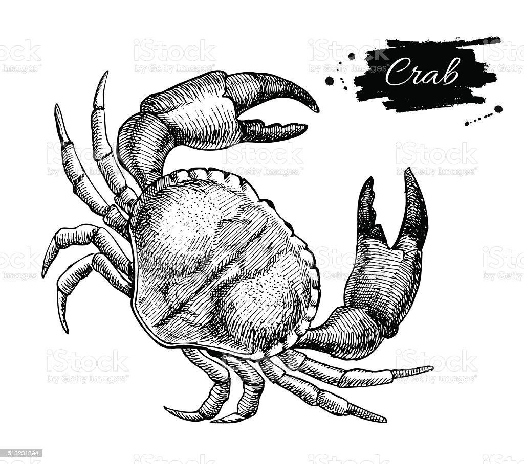 Vector vintage crab drawing. Hand drawn monochrome seafood illus vector art illustration