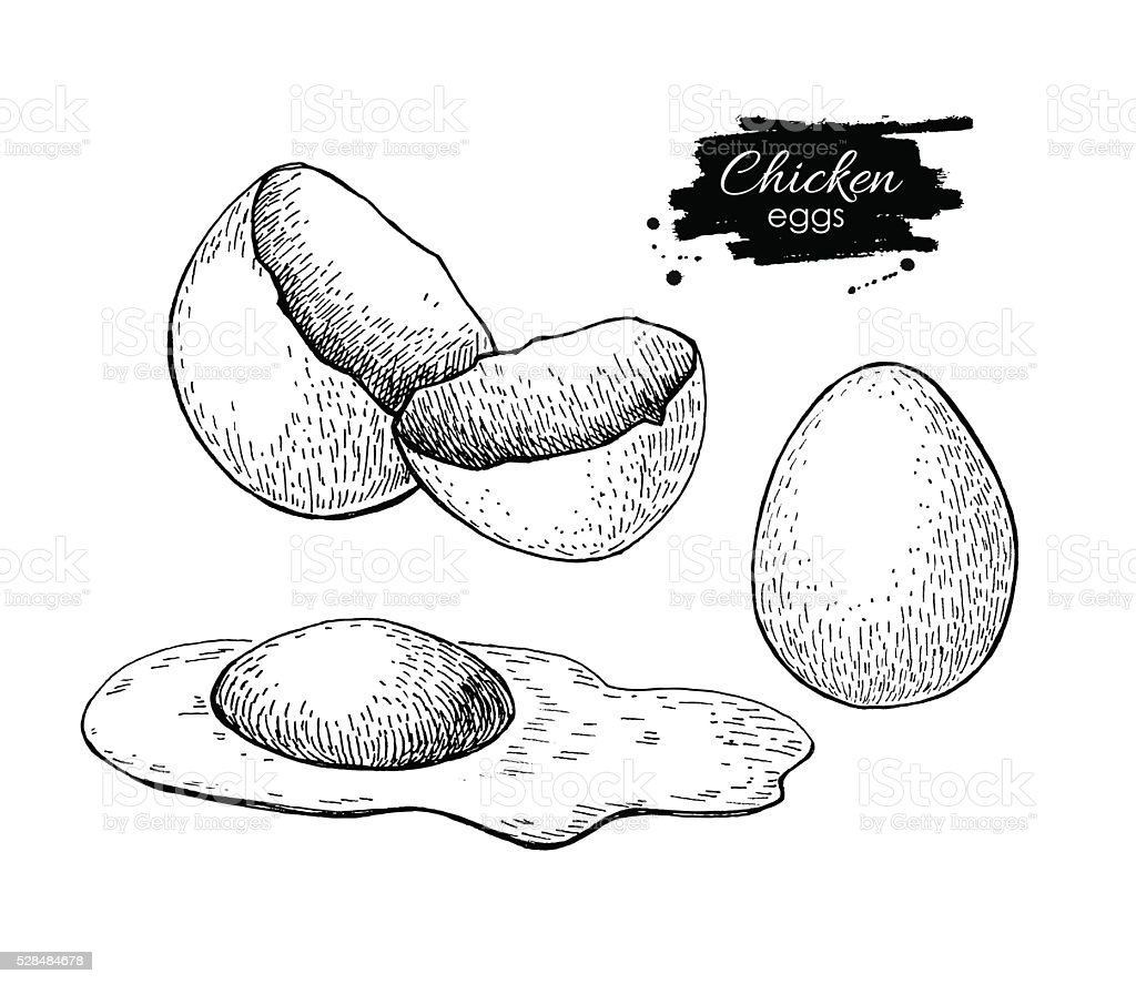 Vector vintage hand drawn scrambled chicken egg. vector art illustration