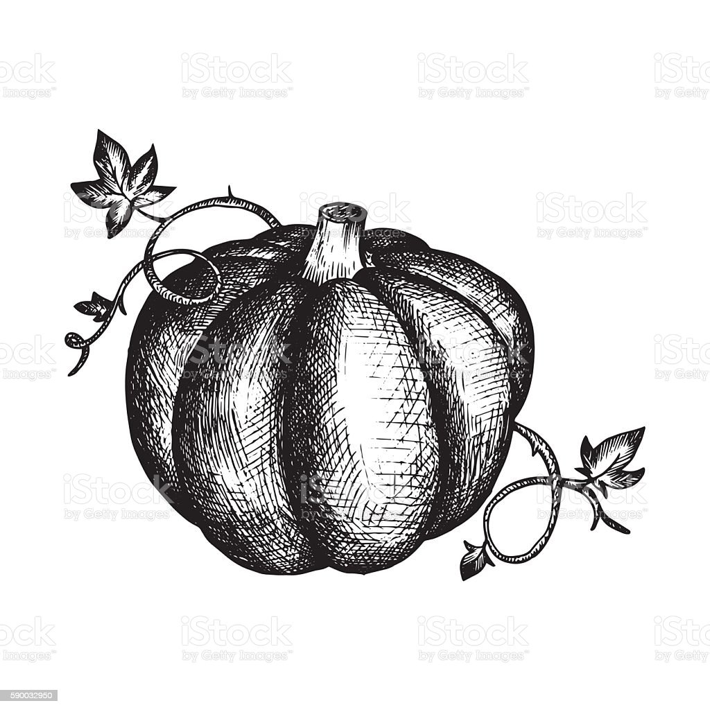 vector vintage pumpkin and leaves vector art illustration