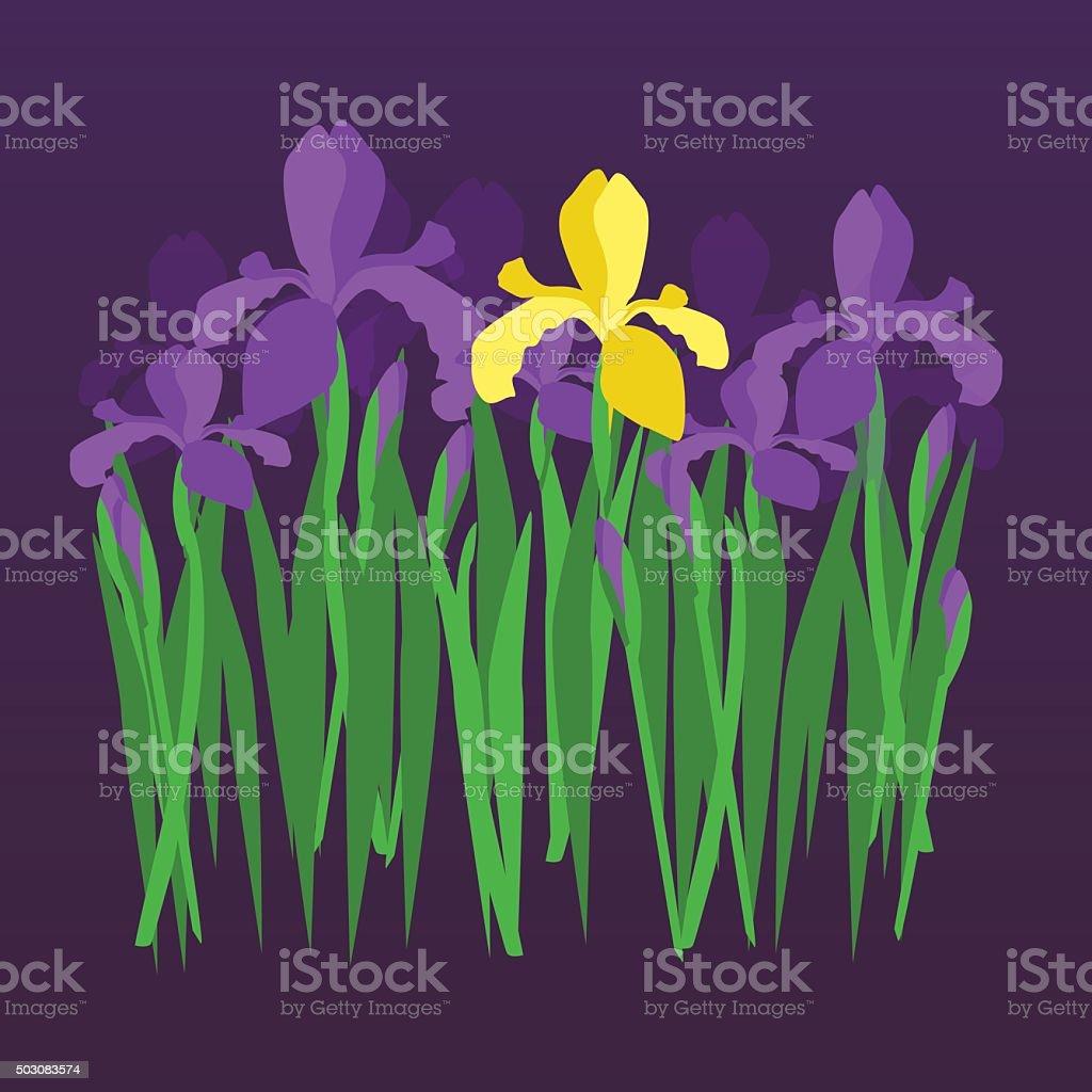 Vector violet and yellow irises on dark night gradient background vector art illustration