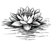 Vector water lily, black and white.
