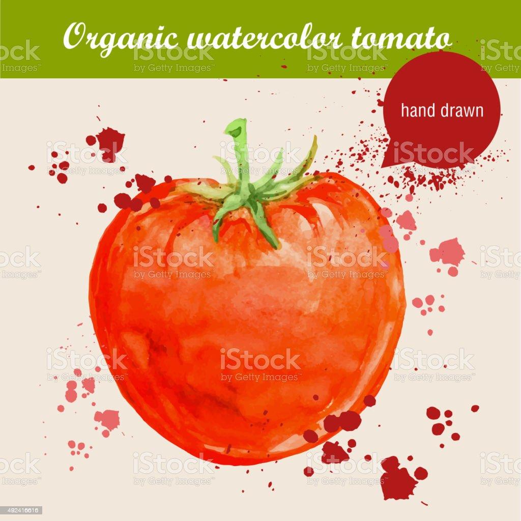 Vector watercolor hand drawn fresh tomato with watercolor drops vector art illustration