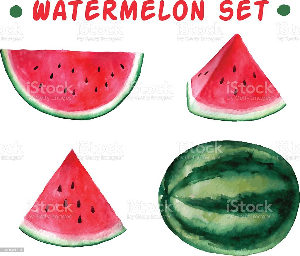 Vector watercolor hand drawn watermelon set. vector art illustration