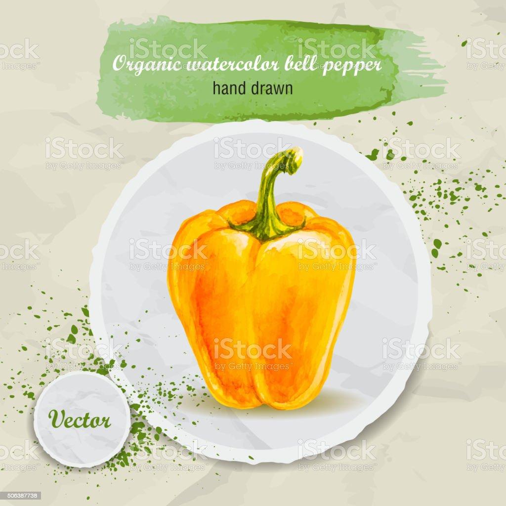 Vector watercolor hand drawn yellow bell pepper vector art illustration