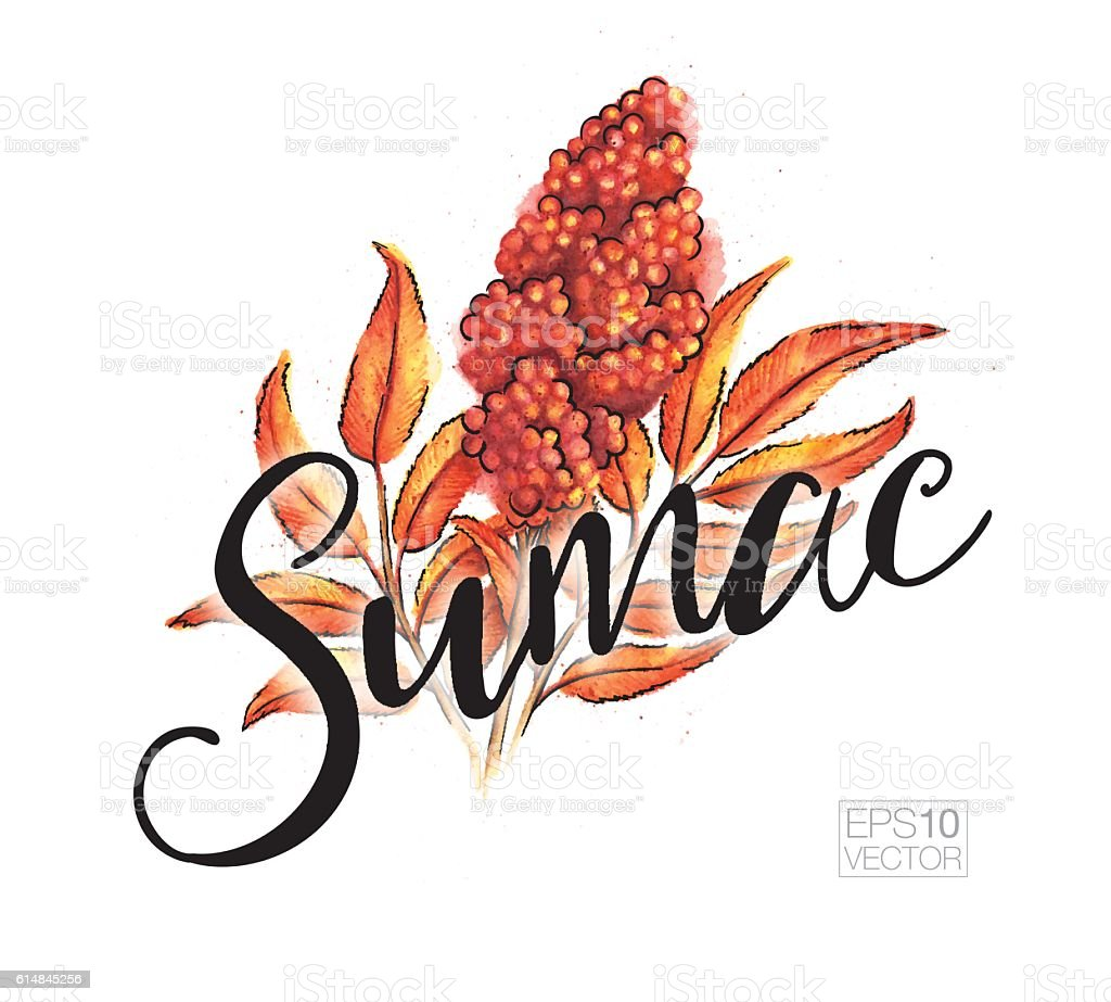 Vector Watercolor Illustration of Sumac in Fall Colors with Text vector art illustration